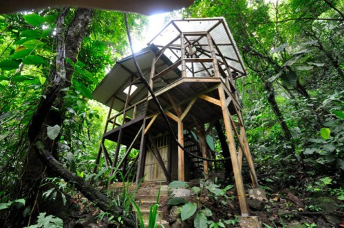 Sustainable-treehouse-exterior-7